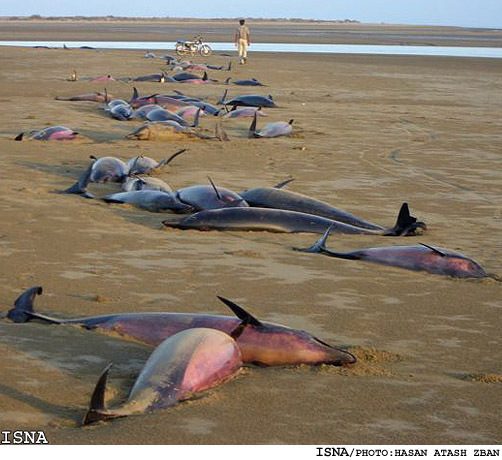 Dead-Dolphins-Jask-PersianGulf1-1.jpg